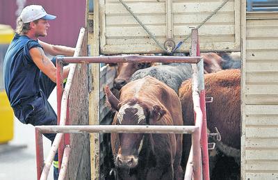 Egipto interesado en importador ganado en pie de Paraguay