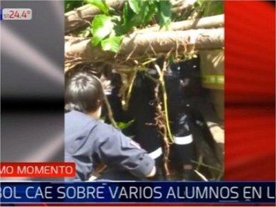 Luque: Árbol se desplomó y cayó sobre estudiantes