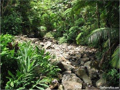 Merma la fauna de bosques tropicales por calentamiento global