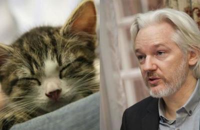 'Aseo y cuidado adecuado': Ecuador le exige a Julian Assange que cuide a su gato o podría perder el asilo