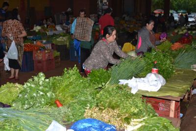 Exceso de lluvia afecta la  producción de verdeos