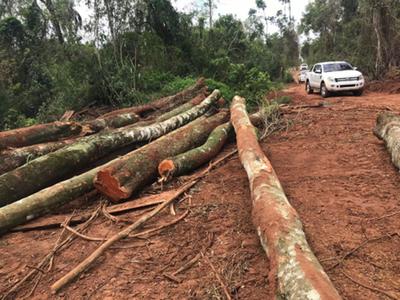 Ordenan detención de brasileños por deforestar bosque nativo