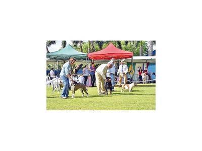 Colorido festival de canes de raza  pura se disfrutó en Luque