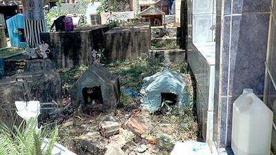 Visitantes de cementerios de Presidente Franco denuncian pésimas condiciones