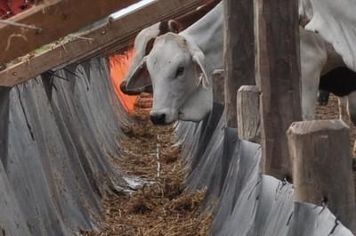 Los precios del ganado gordo continúan firmes con entradas cortas