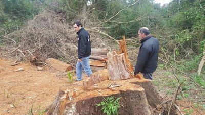 Fiscalía investiga tala de árboles en reserva de la Itaipú Binacional