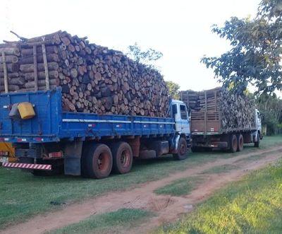 Incautan camiones repletos de madera de especie nativa