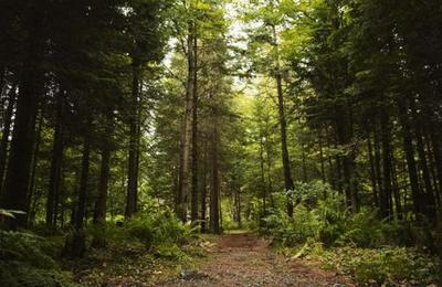El cuadro de casi 1 millón de dólares que apareció enterrado en un bosque en Rumania