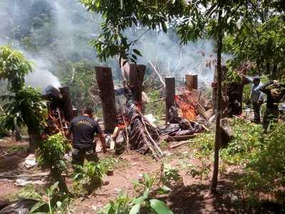 SENAD destruye centros de producción de marihuana en montes del Amambay – Prensa 5