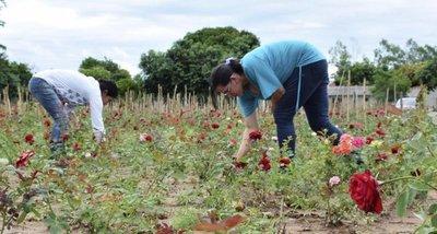 Implementan la floricultura como un rubro de renta