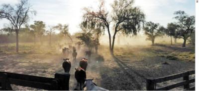 Promueven la producción sustentable de ganado y soja en el Chaco