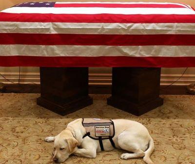 Conmovedora escena en velorio del ex presidente de los EEUU