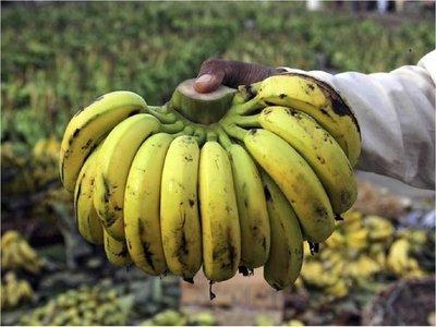 Diputados aprueba inclusión de la banana en la merienda escolar