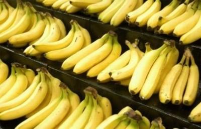 Aprueban inclusión de la banana en la merienda escolar
