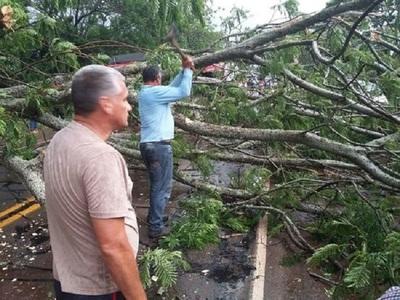 Mujer sufre caída de árbol durante tormenta y muere