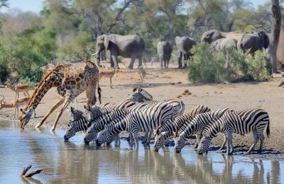 Este mamífero se suma a la lista de animales en peligro de extinción