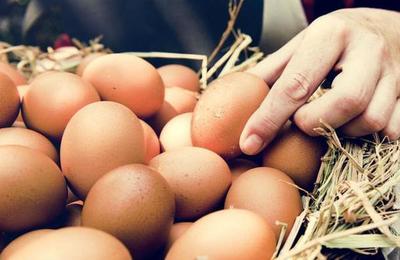 ¿Por qué? Animalistas afirman que las feministas no deberían comer huevo