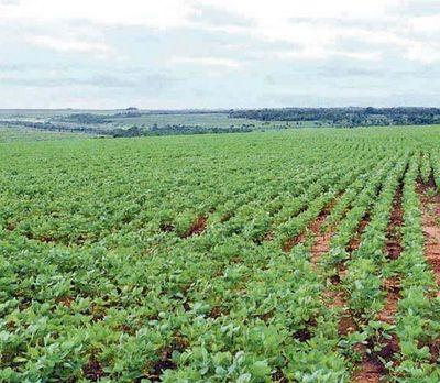 Campesinos agreden a fumigadores de soja