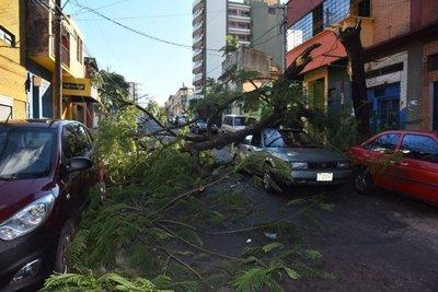 Árbol cayó sobre un auto estacionado en doble fila