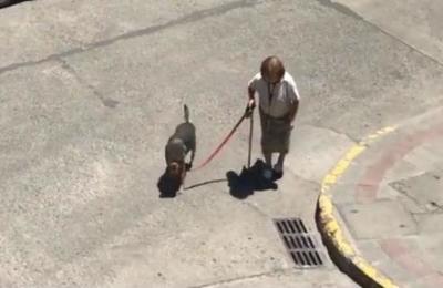 El conmovedor video de una perrita y su anciana dueña que te dará una lección sobre lealtad