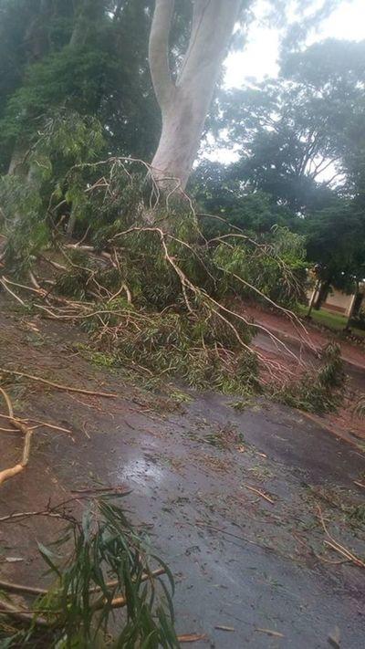 Vecinos se organizaron para retirar ramas de avenida Vittorio Curiel