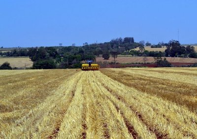 Prolongada sequía genera preocupación en productores de soja en el Alto Paraná