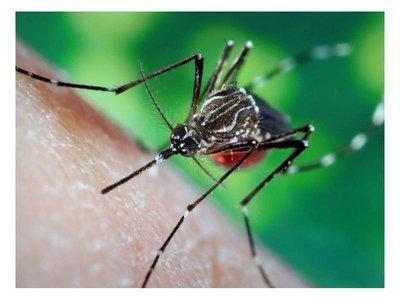 ¿Cuál es la relación entre la cervecita y los mosquitos?