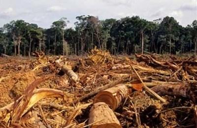Comunidad indígena preocupada por deforestación pide apoyo a las autoridades