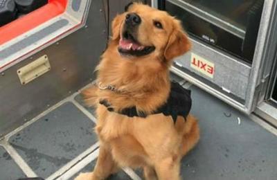 Perro detector de drogas sufre sobredosis tras oler a asistentes de fiesta electrónica