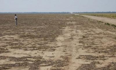 Ambientalistas juntan 57 mil firmas para exigir la protección de árboles