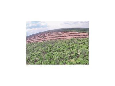 Multa por delito forestal  puede llegar a más de G. 800 millones