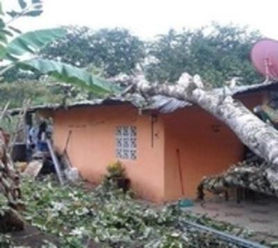 Beba se salva de morir aplastada tras caída de enorme árbol