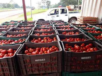 Decomisan más de 5.000 kilos de tomate en Alto Paraná