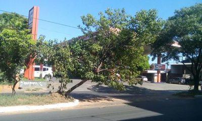 Árbol a punto de caer en plena avenida