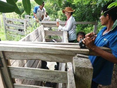 Más de 300 indígenas recibieron capacitación en producción agropecuaria