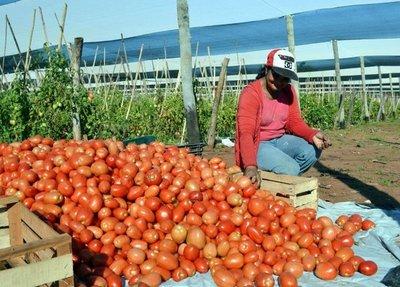 Anuncian importación de tomate argentino