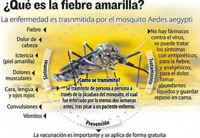 Confirman primer caso de fiebre amarilla en Estado de Paraná, Brasil