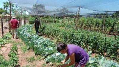Cultivos afectados por calor extremo