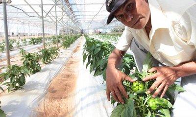 MAG implementará nuevo paquete tecnológico para la producción agrícola