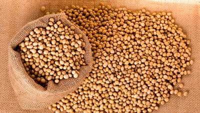 Grupo Timbo participó de la primera reexportación de soja brasileña en bruto