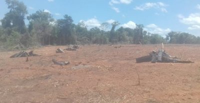 Intervienen desmontes irregulares en San Pedro y Caaguazú