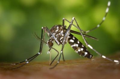Siguen registrando casos de Dengue y Chikungunya en todo el País