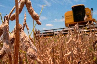 Se cosechó el 60% del área de soja la reducción de rendimiento se estima en un 30%