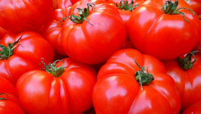 Productores de tomate desean abastecer demanda anual (el país cuenta 1.300 hectáreas de cultivo)
