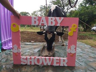 """Organizaron un """"vaca shower"""""""