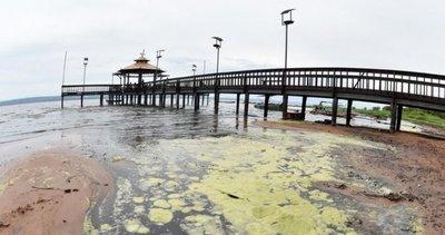 El Ypacaraí presenta afloramiento masivo de algas tóxicas en Areguá – Prensa 5