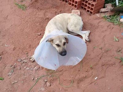 Borrachos casi matan a la perrita del vecino