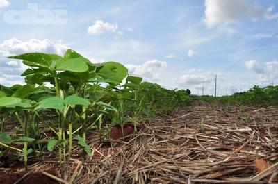 Semillas certificadas garantizan la producción