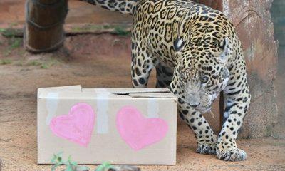 Fauna del CIASI celebró Día de San Valentín con original banquete