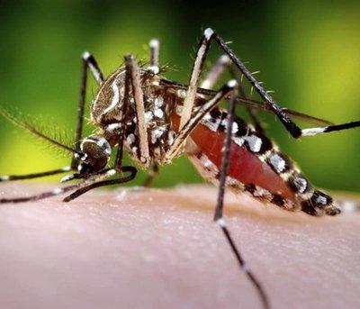 Dengue del serotipo 2 presente en zona del Amambay